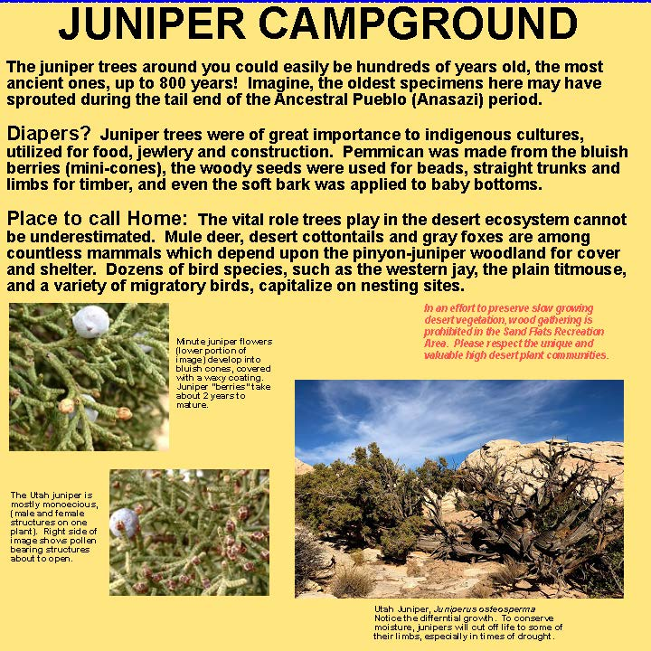 Juniper campground